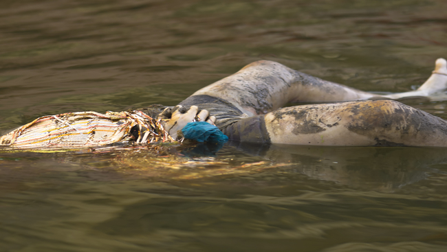 Ganges body floating-I