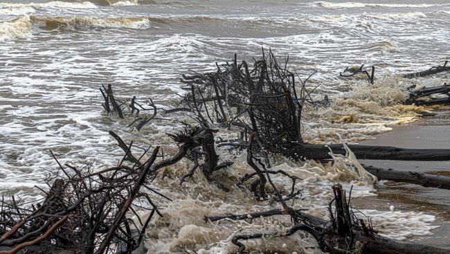Trees toppled